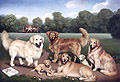 Six Golden Retrievers