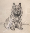Seated Cairn Terrier of Tapscot Kennel
